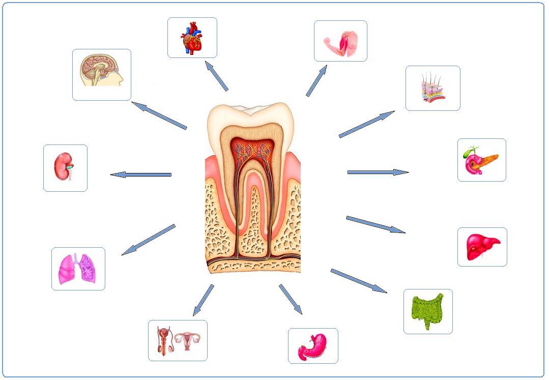 https://www.dentistasecija.es/wp-content/uploads/2017/03/galeria_255_odontologia_neurofocal.jpg